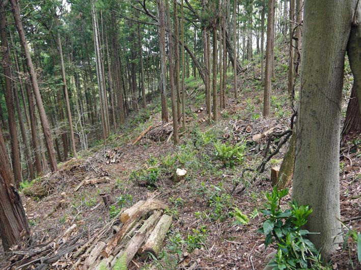 12年度最初の六国見山森林公園の定例手入れ終了:4・21_c0014967_12435914.jpg