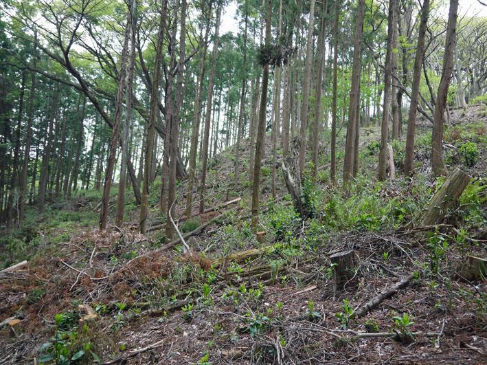 12年度最初の六国見山森林公園の定例手入れ終了:4・21_c0014967_12443195.jpg
