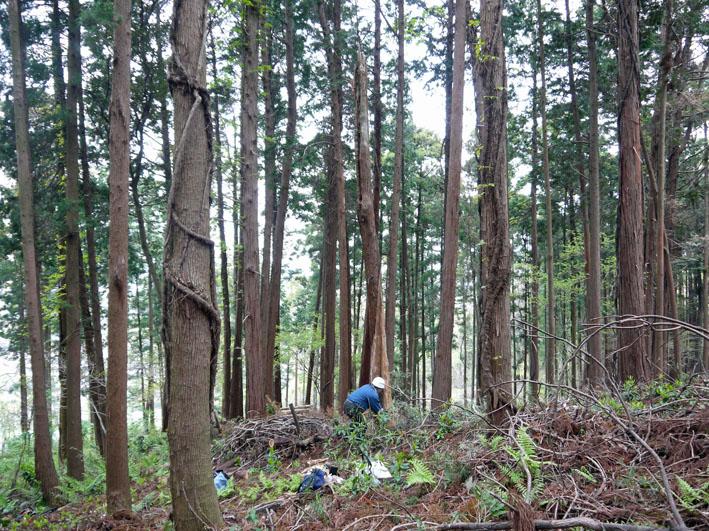 12年度最初の六国見山森林公園の定例手入れ終了:4・21_c0014967_12475310.jpg