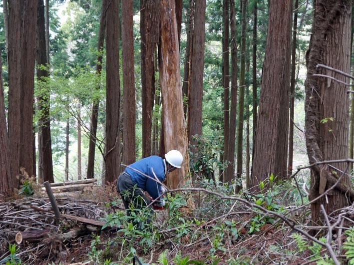 12年度最初の六国見山森林公園の定例手入れ終了:4・21_c0014967_12481044.jpg