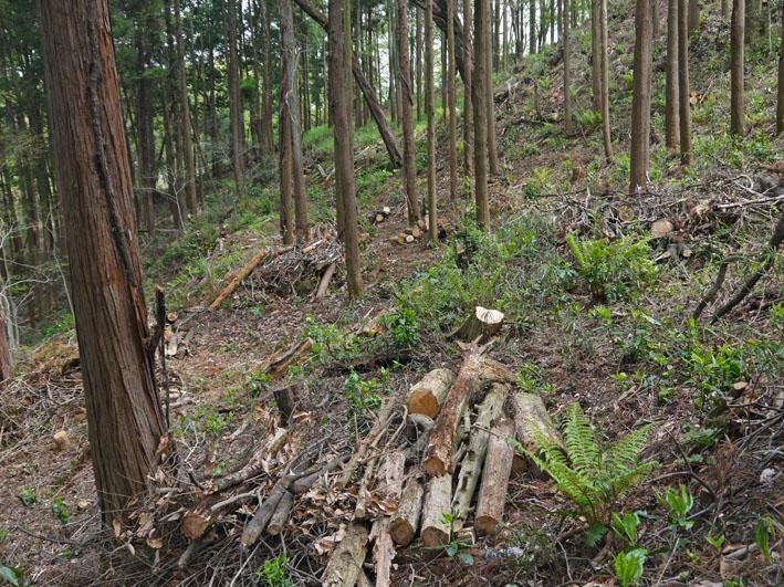 12年度最初の六国見山森林公園の定例手入れ終了:4・21_c0014967_12522274.jpg