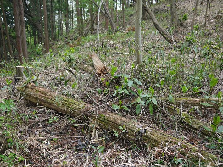 12年度最初の六国見山森林公園の定例手入れ終了:4・21_c0014967_12524667.jpg