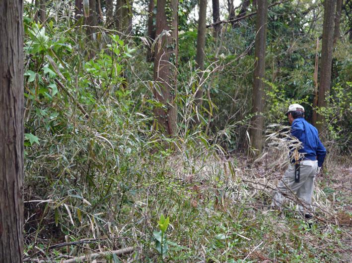 12年度最初の六国見山森林公園の定例手入れ終了:4・21_c0014967_12531666.jpg
