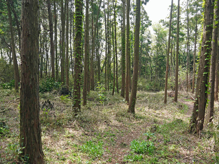 12年度最初の六国見山森林公園の定例手入れ終了:4・21_c0014967_1254434.jpg