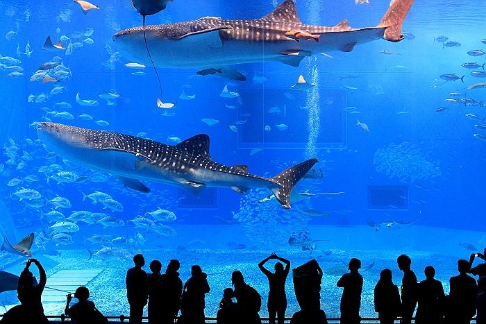 """沖縄 """"美ら海水族館"""" NO.3_a0140608_7202487.jpg"""