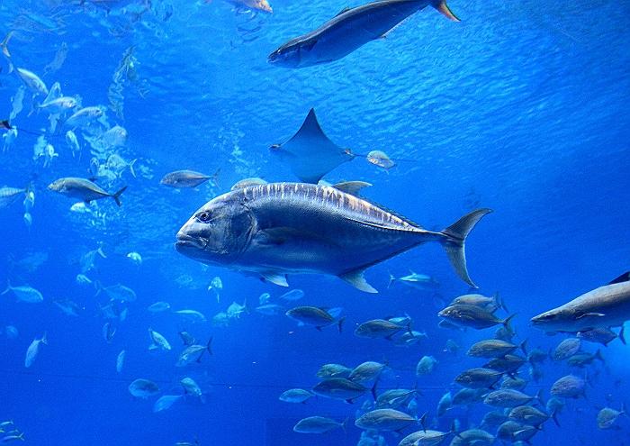 """沖縄 """"美ら海水族館"""" NO.3_a0140608_7221567.jpg"""