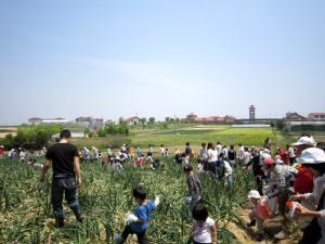 タマネギ収穫とDayキャンプ_d0120421_18182352.jpg