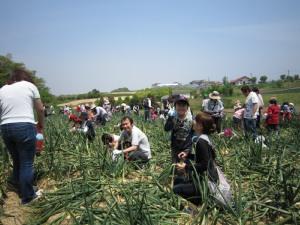 タマネギ収穫とDayキャンプ_d0120421_18183376.jpg