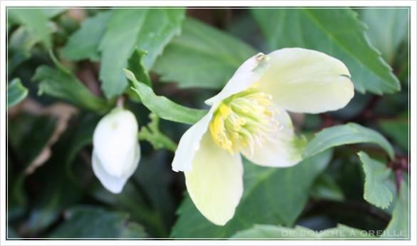 Le printemps est arrivé! 春が来た_d0184921_14165914.jpg