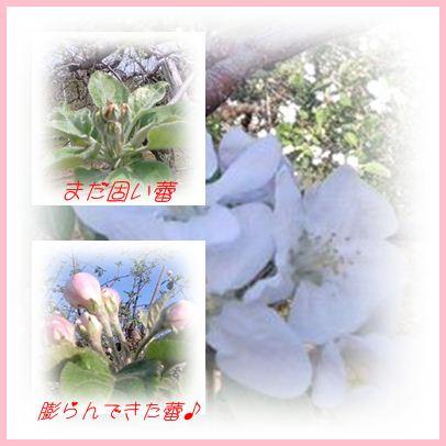 b0166327_13453037.jpg