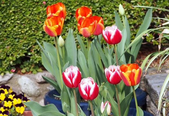 花の庭 _f0214527_14472765.jpg