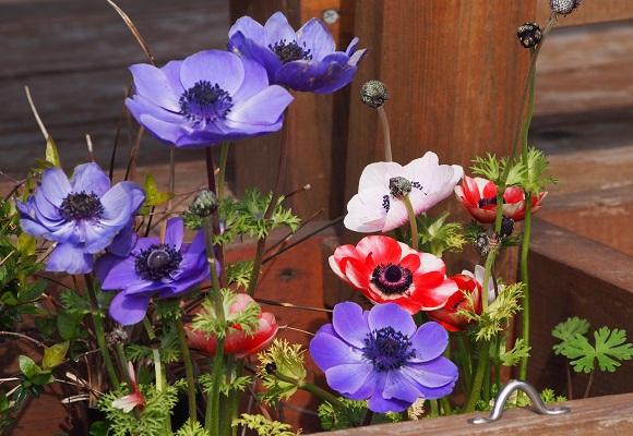花の庭 _f0214527_14475678.jpg