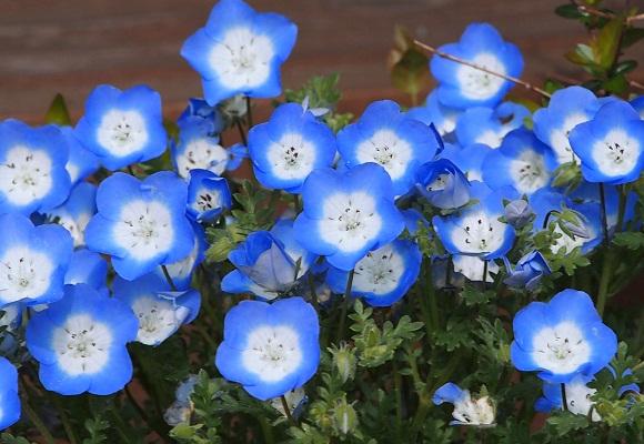 花の庭 _f0214527_14481386.jpg