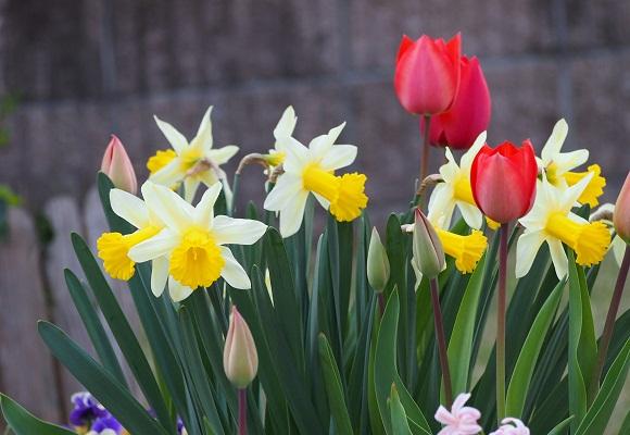 花の庭 _f0214527_1449521.jpg