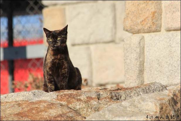 猫の楽園_f0166234_231358.jpg
