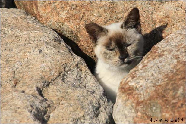 猫の楽園_f0166234_233346.jpg