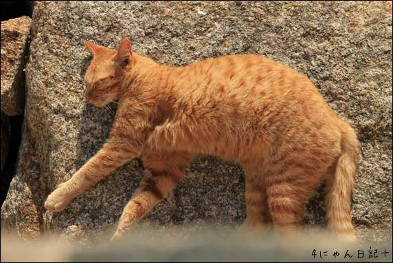 猫の楽園_f0166234_234320.jpg