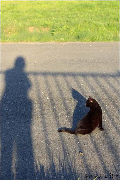 猫の楽園_f0166234_251881.jpg