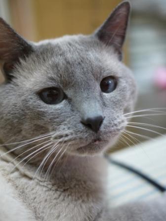 猫のお友だち カイくん編。_a0143140_191850100.jpg