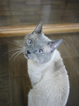 猫のお友だち カイくん編。_a0143140_19205322.jpg