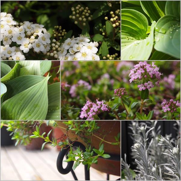 植物賛歌☆_c0152341_21353819.jpg