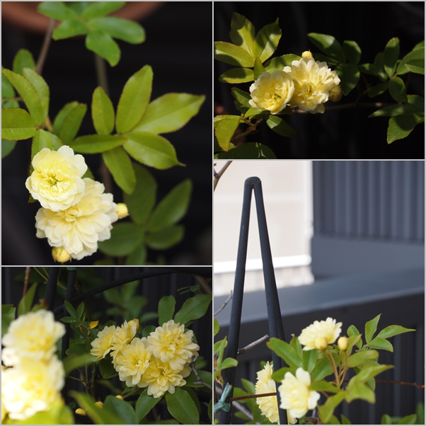 植物賛歌☆_c0152341_21355441.jpg