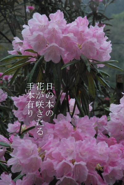 d0098541_162587.jpg
