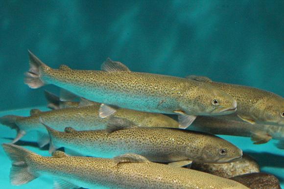 長良川を離れ、舞台は「アジアの魚たち」へと移行します。先ずは、日本の魚か... アクア・トトレポ