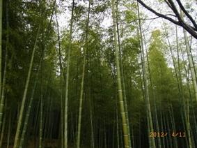 京都~金閣寺_e0195766_5165443.jpg