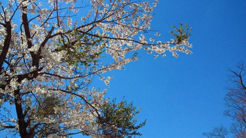 春山登山からのスノボ_e0173183_10112351.jpg