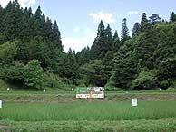 7月12日の田んぼ(月光原小・西根小)_d0247484_22154036.jpg