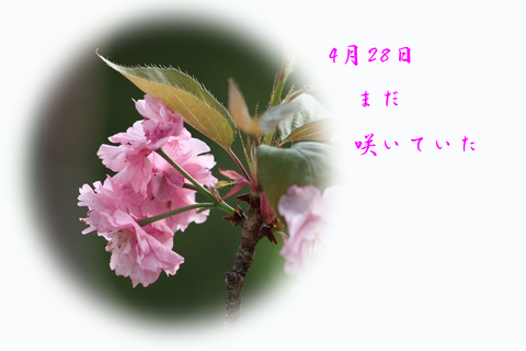 b0012595_8204216.jpg