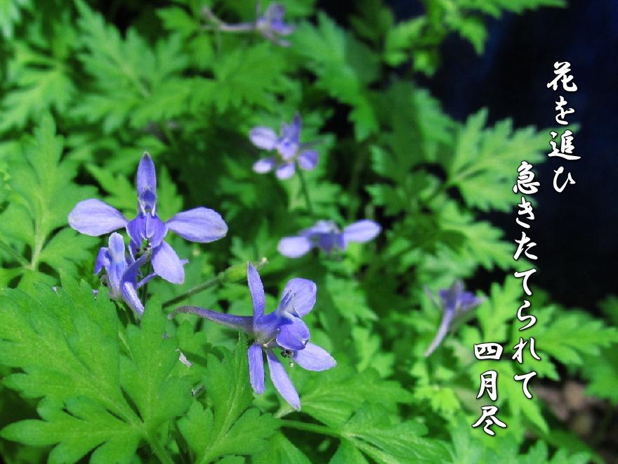 f0137096_2312255.jpg