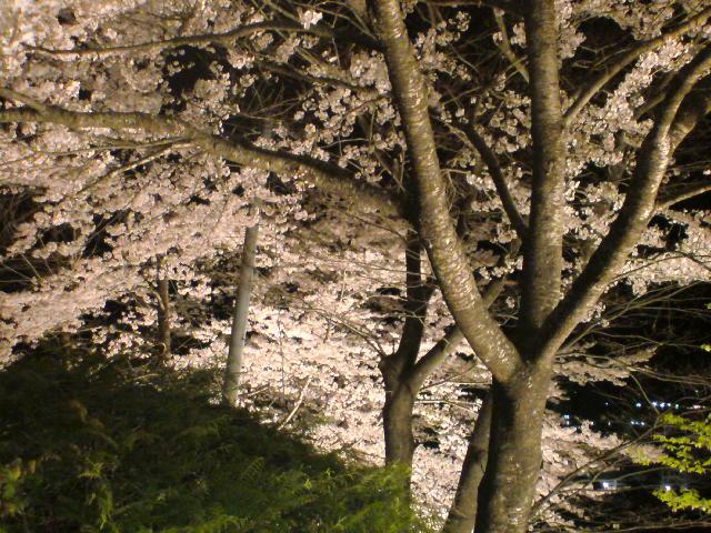 夜桜_b0040798_873069.jpg