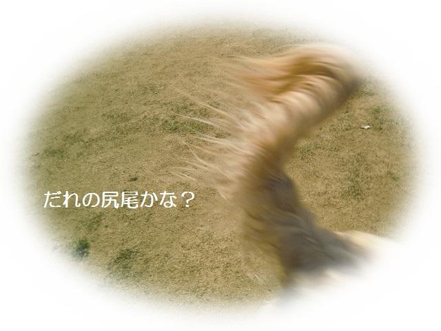 d0243802_2137944.jpg
