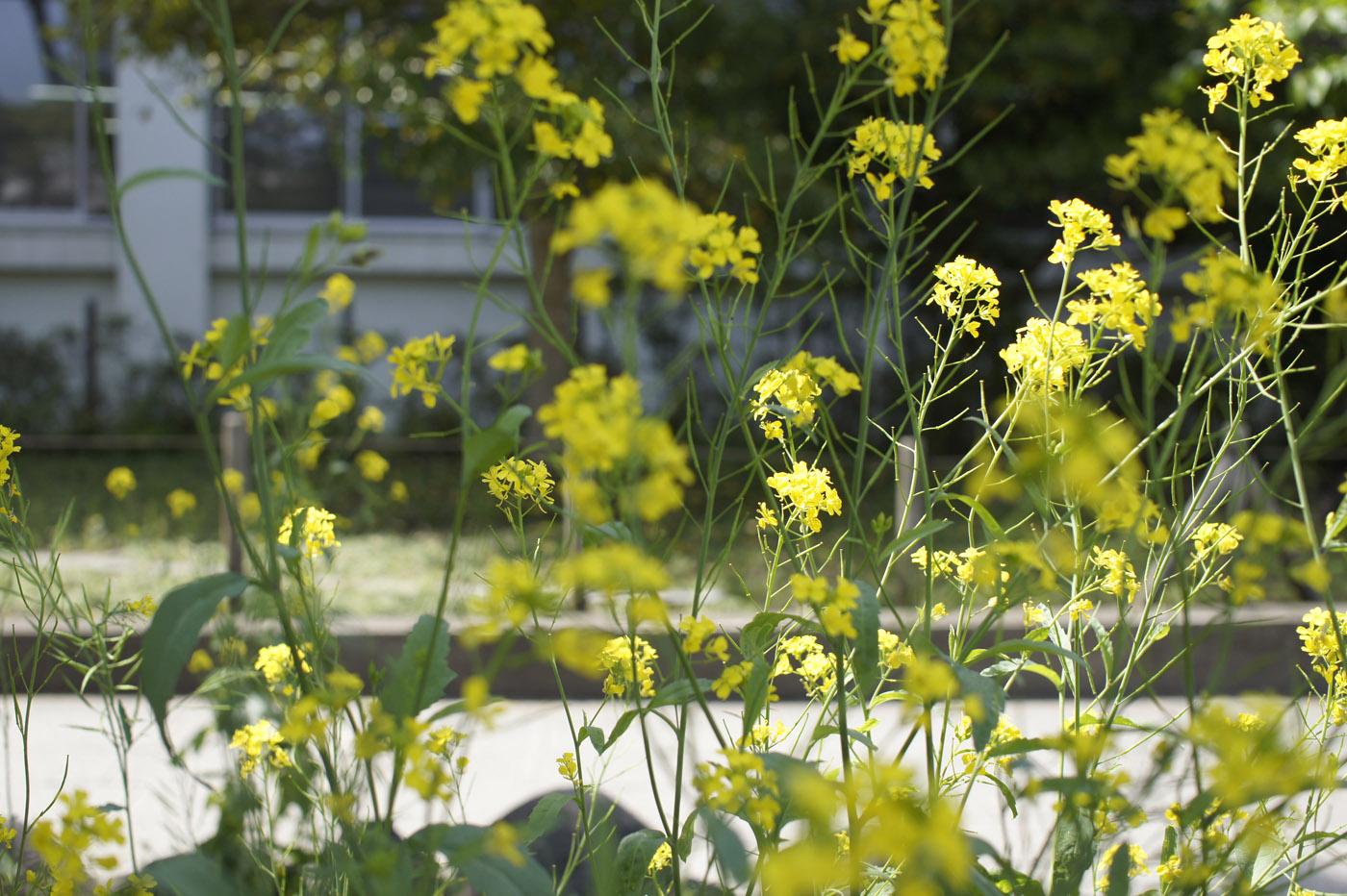 鎌倉の花。_c0120903_2573440.jpg