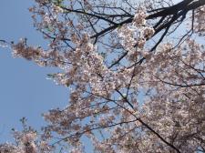映画「カリーナの林檎」観てきました @シネ・ウインド_d0235522_0421794.jpg
