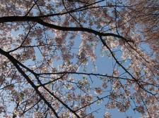 映画「カリーナの林檎」観てきました @シネ・ウインド_d0235522_0424150.jpg