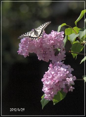 庭の花たち_c0026824_17103429.jpg