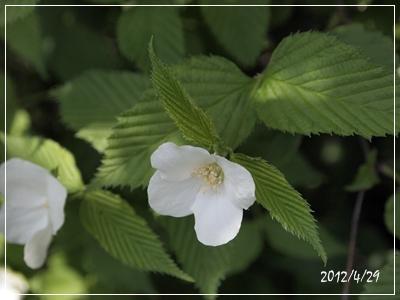 庭の花たち_c0026824_17121830.jpg