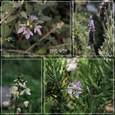 庭の花たち_c0026824_17124580.jpg