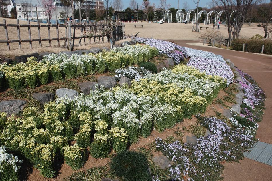 ゆいの花公園のかわいいサクラ_c0223825_12542291.jpg