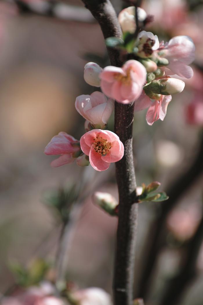 ゆいの花公園のかわいいサクラ_c0223825_13124315.jpg