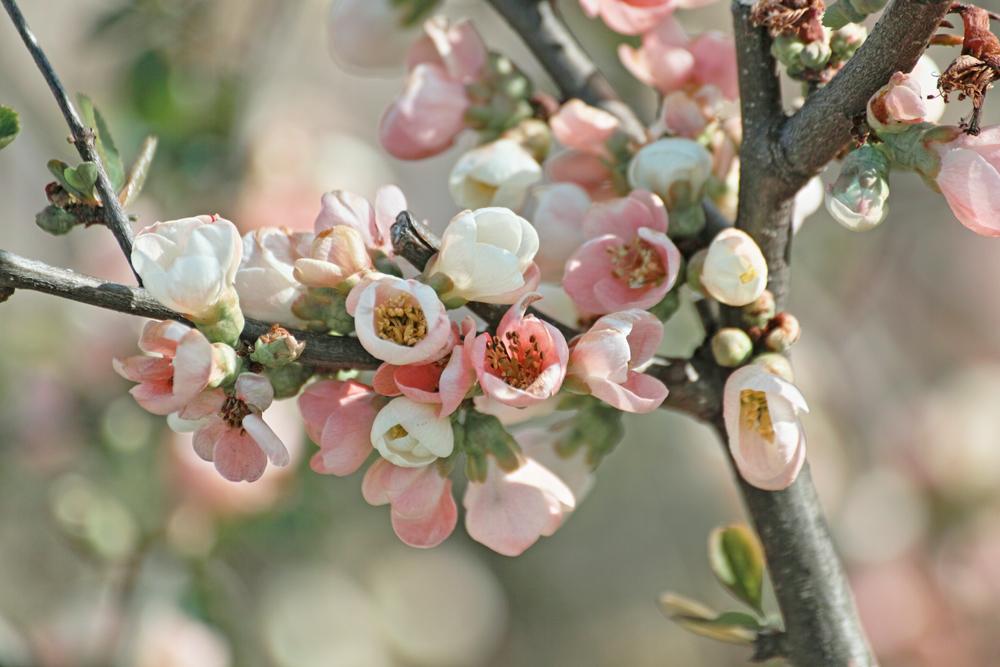ゆいの花公園のかわいいサクラ_c0223825_13144419.jpg