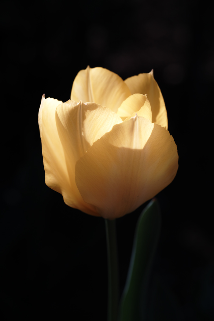 ゆいの花公園のかわいいサクラ_c0223825_13282551.jpg