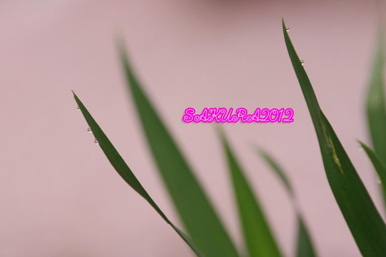 d0015026_8335025.jpg