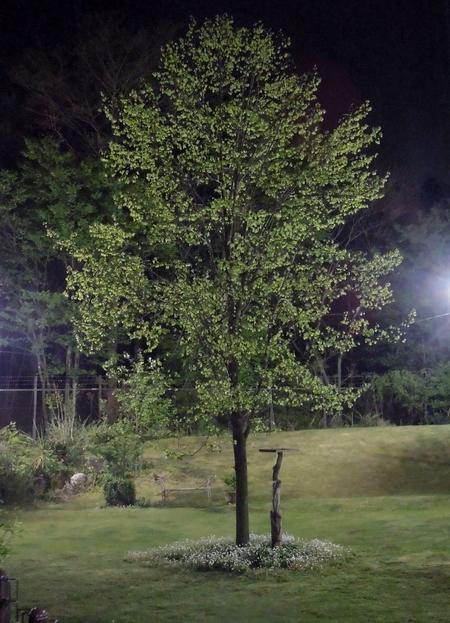 新緑の夜景_d0171630_21292211.jpg