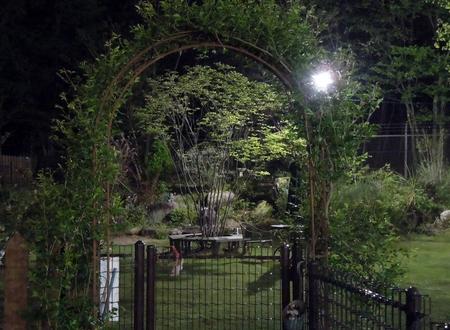 新緑の夜景_d0171630_21295829.jpg
