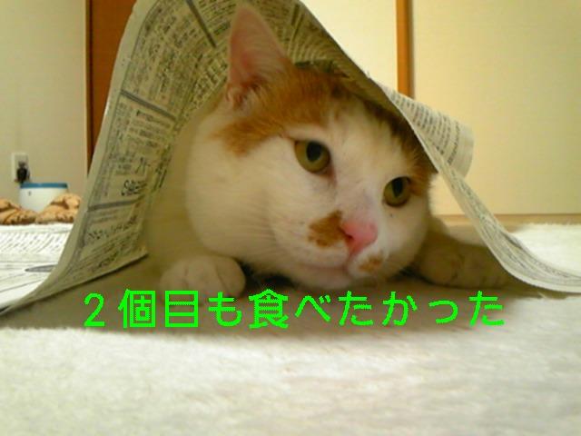 d0078350_2015278.jpg