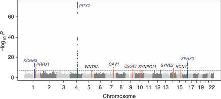心房細動関連遺伝子が新たに6つ同定される;Nature Geneticsより_a0119856_22403210.jpg